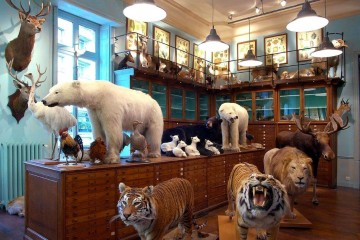discover-the-strangest-shops-in-paris6